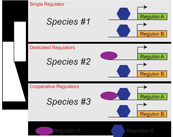 Diagram_generic